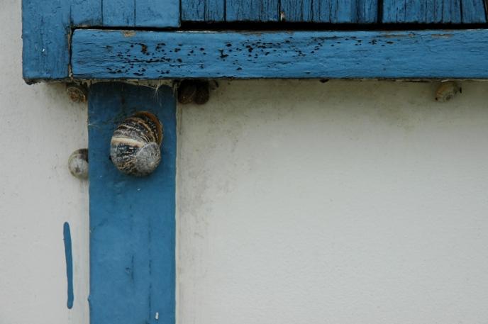 CP-DSC_2802-escargot bleu les Jacquets