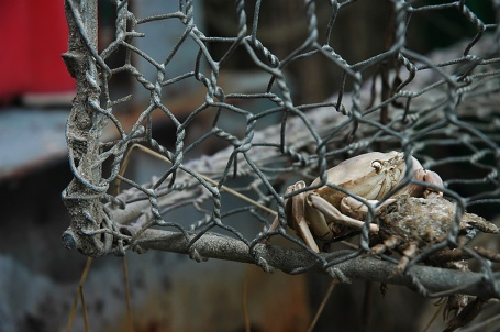 CP-DSC_3023-panier de crabe
