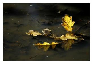 CP-DSC_3191-feuilles dans l'eau