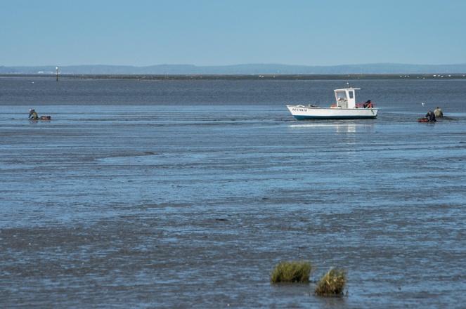 CP-DSC_3319-bateau & 3 ramasseurs de coques