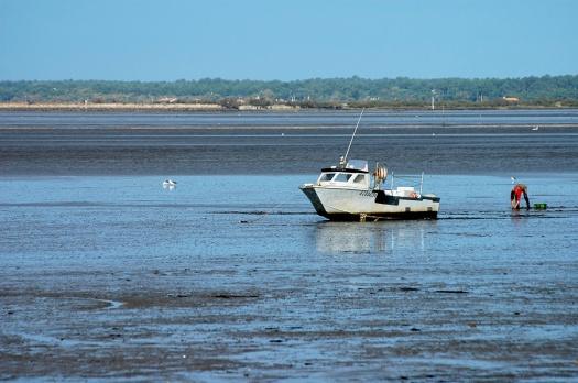 CP-DSC_3340-bateau & pêcheur de coques