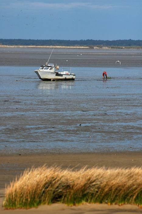 CP-DSC_3343-bateau, ramasseur coques & mouette
