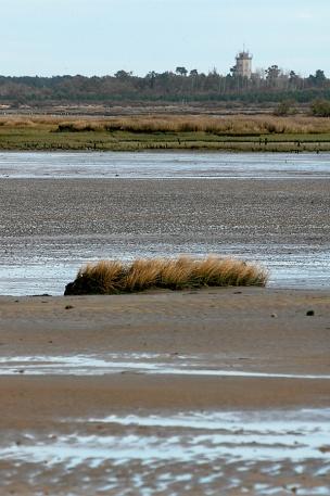 CP-DSC_3357-Audenge, sable & herbes