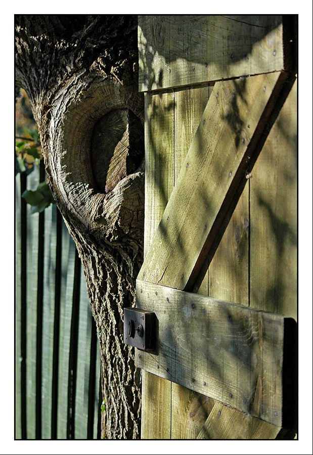 CP-DSC_3775-porte arbre & barricade