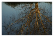CP-DSC_3907-reflet arbre
