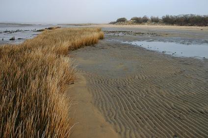 CP-DSC_3973-herbes & vagues de sable