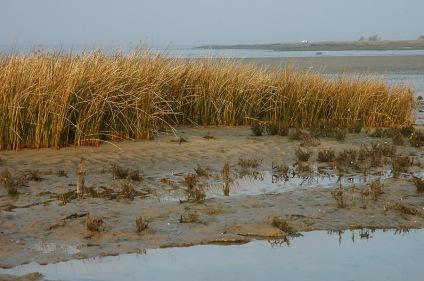CP-DSC_3979-herbes, sable & eau