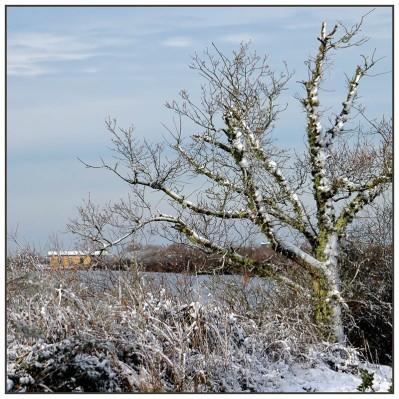 CP-DSC_4264-arbre & maison du parc
