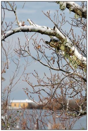 CP-DSC_4265-arbre & maison du parc REC