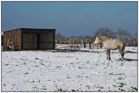CP-DSC_4349-cheval blanc