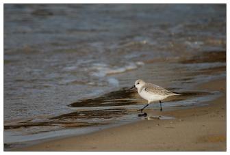 CP-DSC_4477-oiseau