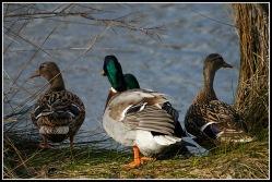 CP-DSC_4660-2 couples colverts