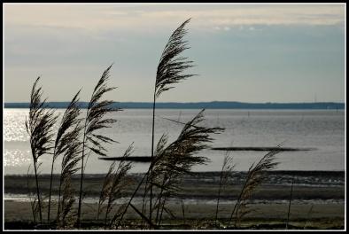 CP-DSC_4733-roseaux & Bassin