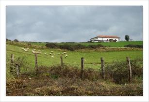 CP-DSC_4881-ferme & moutons Dancharia