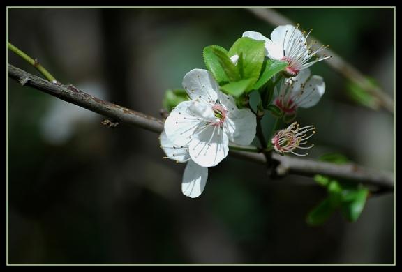 CP-DSC_5046-fleur