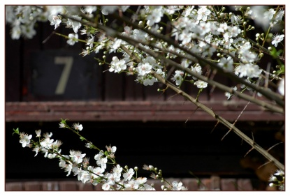 CP-DSC_5051-fleurs & 7