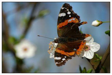 CP-DSC_5133-papillon