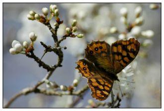 CP-DSC_5252-fleur & papillon