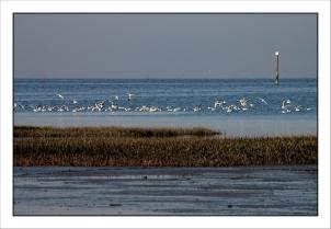 CP-DSC_5446-Bassin & colonie goélands