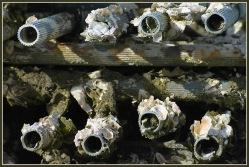CP-DSC_5584-tubes & huîtres