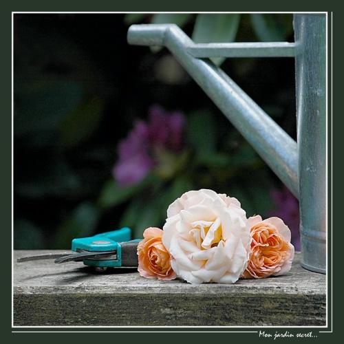 CP-DSC_6365-mon jardin secret