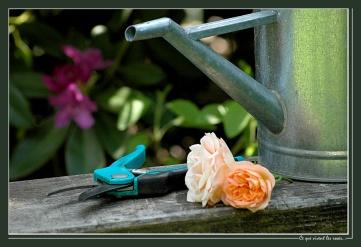 CP-DSC_6369-ce que vivent les roses