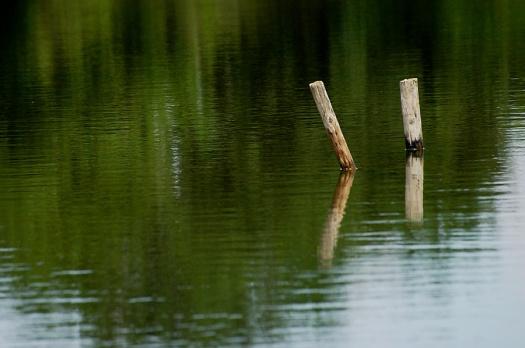 CP-DSC_6596-poteaux dans l'eau