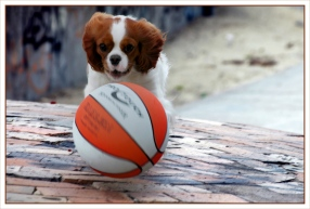 CP-DSC_6872-chien & ballon