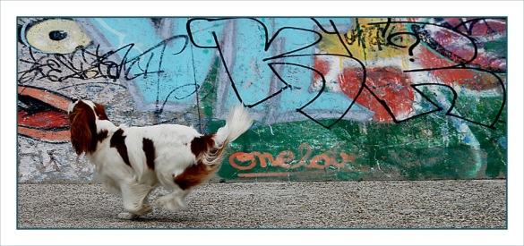CP-DSC_6877-panoramique tag & chien