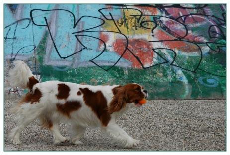 CP-DSC_6878-chien & tag