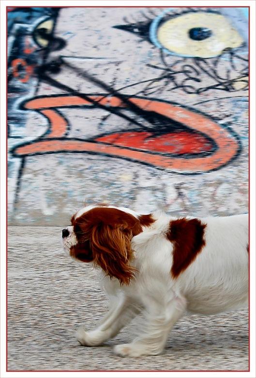 CP-DSC_6879-chien & tag