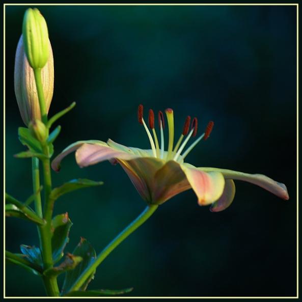 CP-DSC_7099-2-fleur de droite