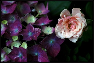 CP-DSC_7127-mini rose & hortensia