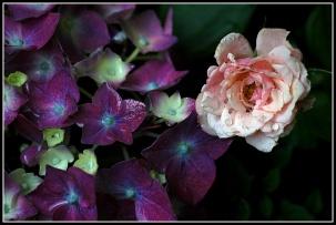 CP-DSC_7127-mini rose & hortensia