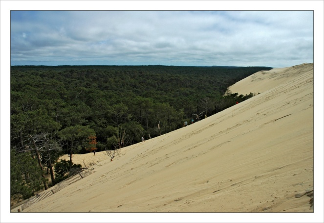 CP-DSC_7724-dune & forêt