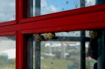 CP-DSC_7945-escargots & reflets fenêtre rouge
