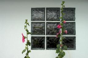 CP-DSC_7976-carreaux de verre & roses trémières
