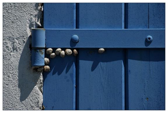 CP-DSC_8140-gond bleu & escargots