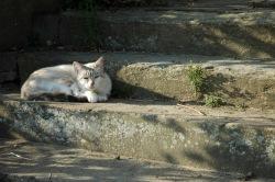 CP-DSC_9050-chat à Grazac