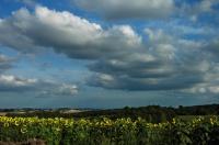 CP-DSC_9057-nuages & tournesols