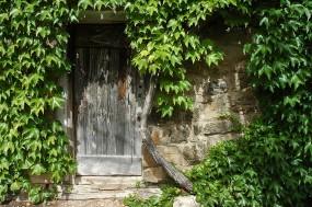 CP-DSC_9213-lierre & vieille porte