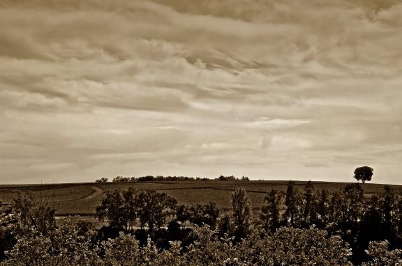 CP-DSC_9396-coteaux, ciel & arbre sépia