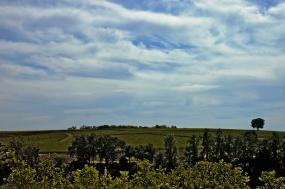 CP-DSC_9396-coteaux, ciel & arbre