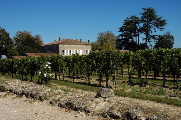 CP-DSC_9420-vigne & chateau