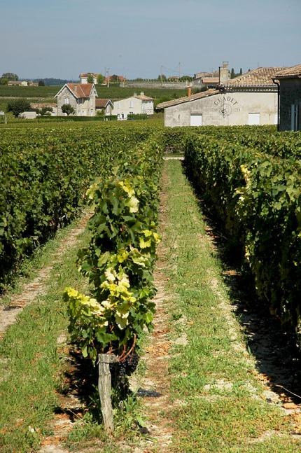 CP-DSC_9433-rang de vigne & propriété
