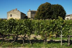 CP-DSC_9516-vigne & maisons