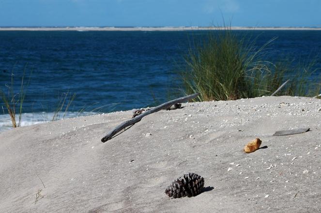 CP-DSC_9562-pomme de pin, oyats, océan et Arguin