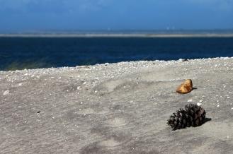 CP-DSC_9590-dune, pomme de pin, Arguin & Cap