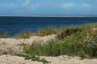 CP-DSC_9592-végétation dune, Arguin, Cap-Ferret