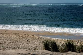 CP-DSC_9599-oyats, rivage & océan
